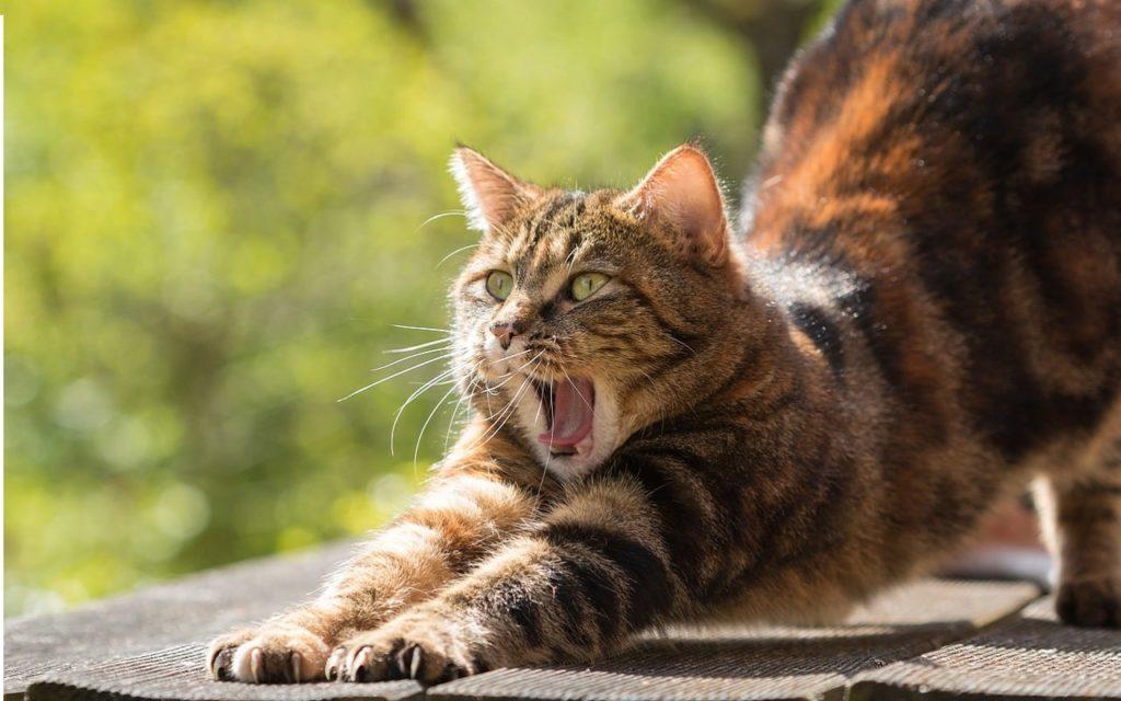 йога для начинающих кот
