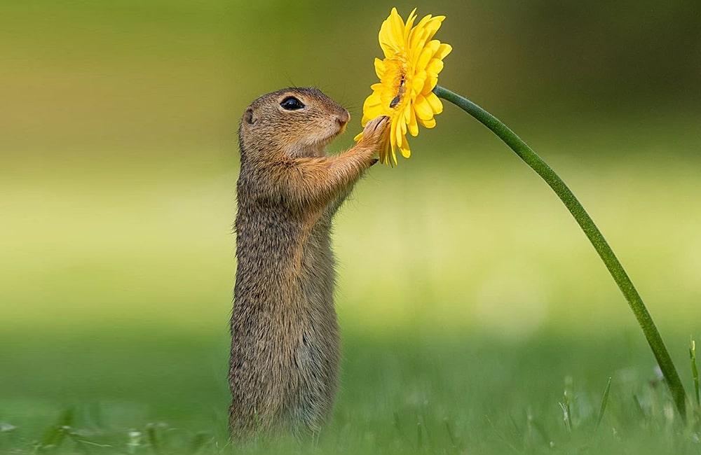 фотограф заснял белку с цветком